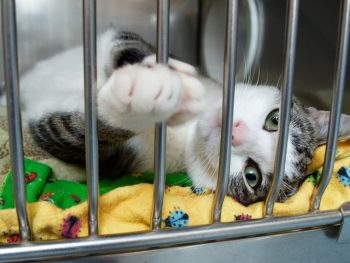 Visit Forgotten Cats at these PetSmart Adoption Centers