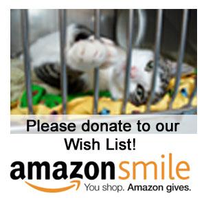 Donate to our Amazon Smile Wish List!