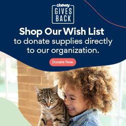 Donate to our Chewy Wish List!