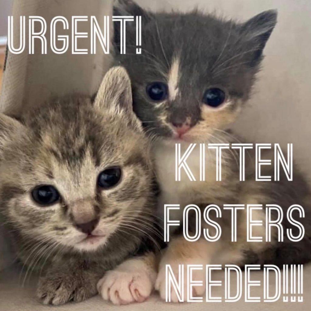 KittenFosters